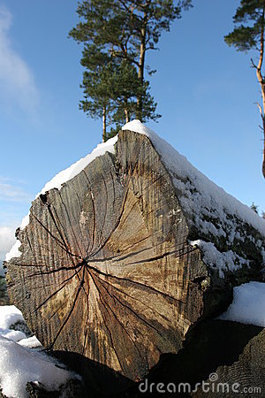 Cut log in snow
