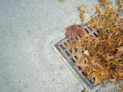 Grate and leaves 2