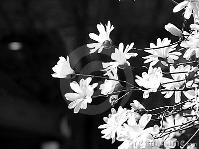 Black and White Artistic Flowers