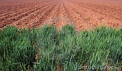 Plowed Farm Field