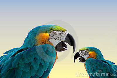 Macaw parrots-same