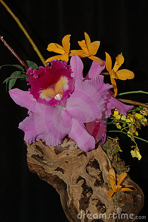 Orchid composition