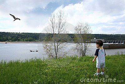 Boy At The Park Watching Geese Swim By