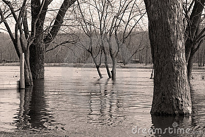 Black and white river and trees