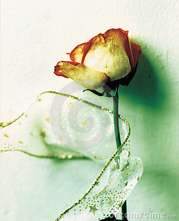 Rose for romance