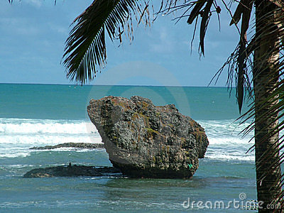 Rock and palm_2