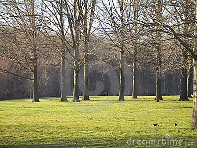 Green Grass and Tall Trees