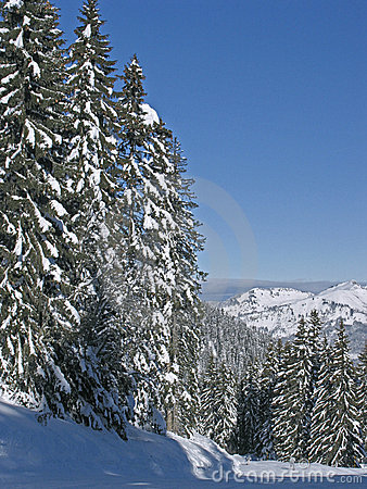 Flaine - Snowy trees and blue skies