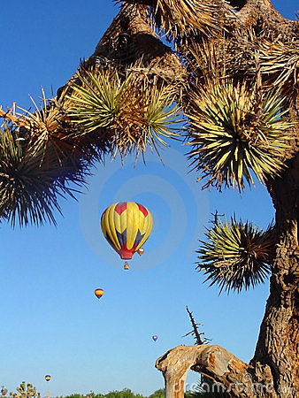 Desert Balloon Race