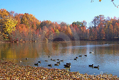 Fall Duck pond