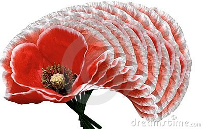 Poppies design