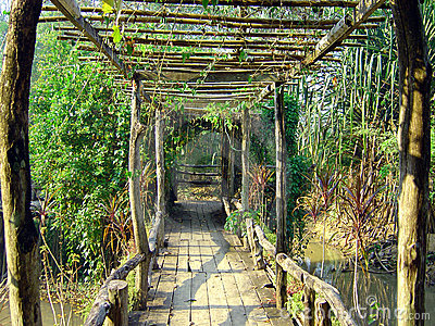 Bridge in thai jungle