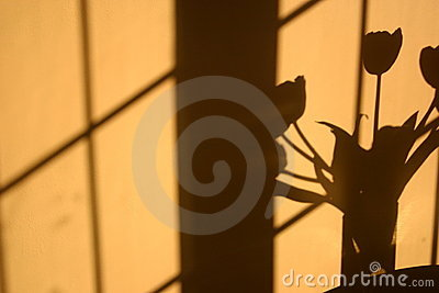 Shadow of tulip flowers on wall