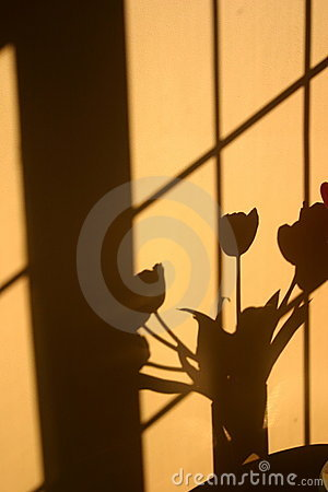 Vertical shadow of tulip flower bouquet
