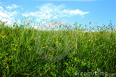 Nice wather landscape