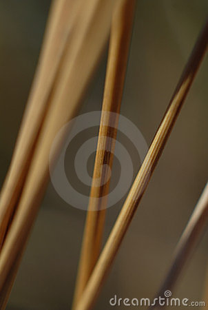 Stems of wild Grass