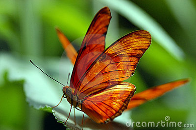 Butterfly and a leaf
