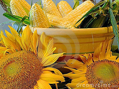 Corn and sunflowers