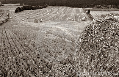 Harvest field bale of straw