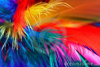 Feather Abstract 1