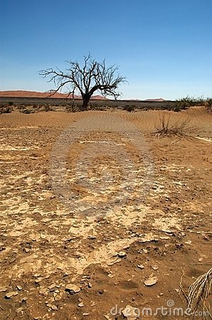 Dry earth in namib desert