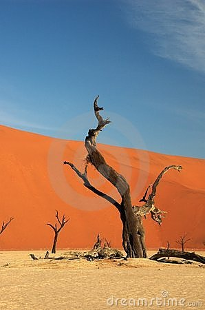 Abstrace tree at deadvlei