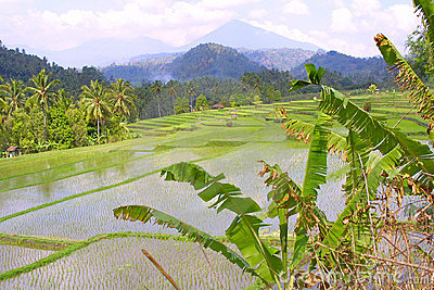 Rice terraces of Asia