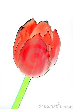 Abstract Tulip