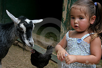 Petting Zoo Conversation
