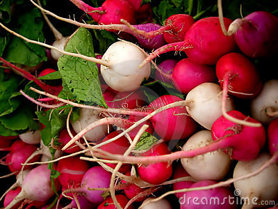 Bunches of multicolored radishes.