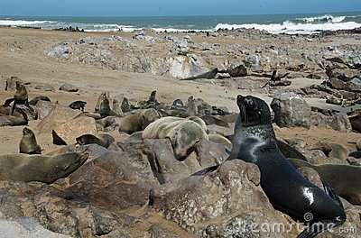 Seal colony at the beach