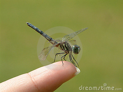 Dragonfly on finger