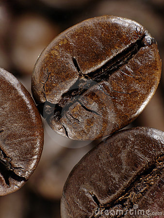 Coffee bean in deep shadows