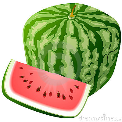 Vector watermelon.