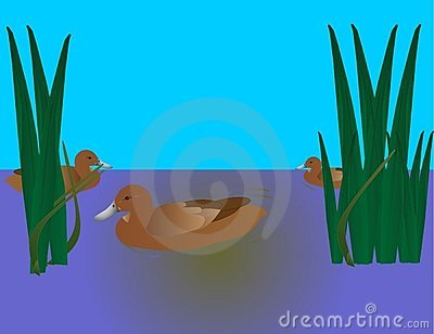 3 Ducks swimming