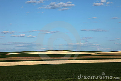 Green and harvested wheat fields