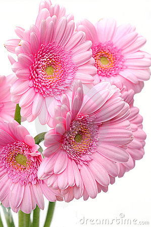 Pretty gerbera flowers