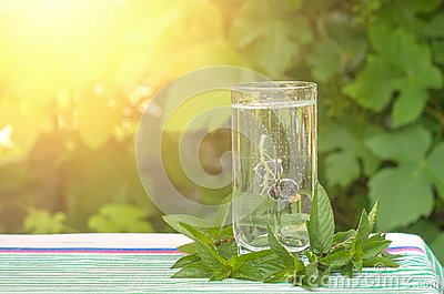 Black currant in a glass of mineral water, mint leaves