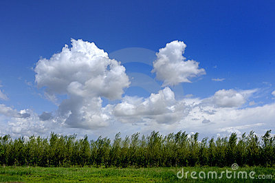 Blue sky, white clouds and trees
