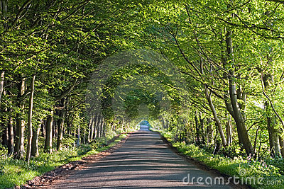 Road running through a tunnel of trees in summer
