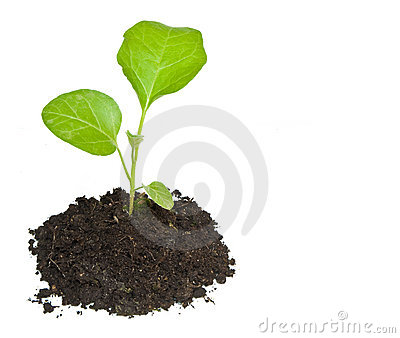Growing green plant isolated