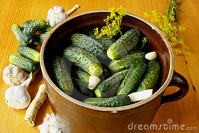 Preparing sour cucumbers