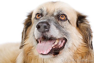 Happy Large Crossbreed Dog