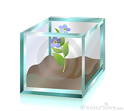 Flower inside glass cube