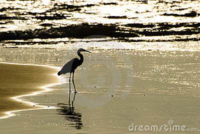 Aquatic heron