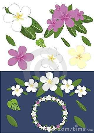 Design with plumeria flowers