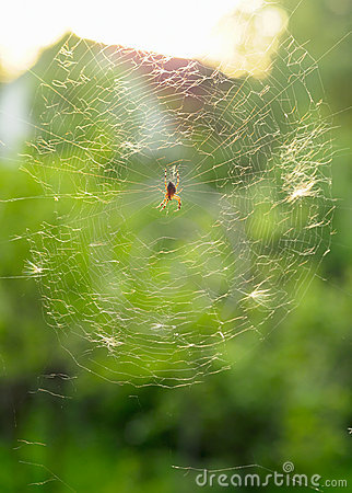 Spider in web.