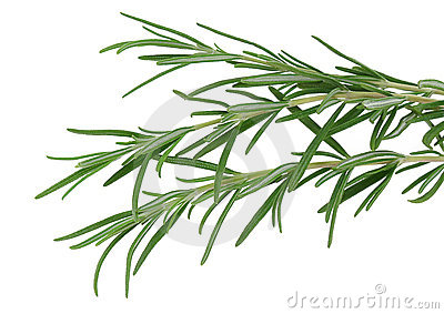 Herb rosemary isolated on white