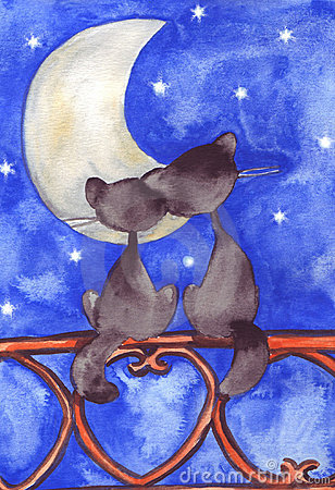 Two cats in love before the moon and stars