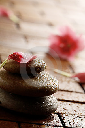 Flower petal resting on rounded pebbles.